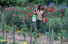 Au potager : 4 solutions contre les maladies  Dans votre potager bio, aidez vos légumes à se défendre plutôt que de les traiter. Découvrez les solutions 100 % naturelles de Rustica contre les maladies au jardin.