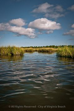 The Point - The successful preservation of Pleasure  House Point, an undeveloped natural open space on  the Lynnhaven River.