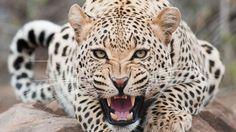 10 суперспособностей животного мира