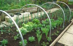The Best Garden Cloche 2016 Raised Garden Beds, Raised Beds, Allotment Gardening, Vegetable Gardening, Mini Greenhouse, Cold Frame, Shed Storage, Garden Bridge, Amazing Gardens
