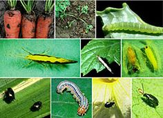 Plant Pest Identification Aid