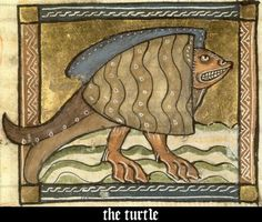 Illuminated Turtle From A Medieval Bestiary.