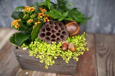 A forest collection for your Autumn home! This faux wood planter is full of tropicals, fall coloured blooms and woodland moss. Accented with acorns and seedpods, you'll feel like you just went foraging in the forest for this seasonal centrepiece!  Shop in-store (Surrey BC) or online www.westcoastgardens.ca  #fall #autumn #tropicals #decor #houseplants