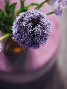 #purple #pink #pinkish #green #decor #flower #inspo #closeup Close Up, Purple, Pink, Dandelion, Shades, Green, Flowers, Decor, Luxury
