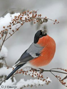 65 Trendy Ideas For Wild Nature Tattoo Pets Cute Birds, Pretty Birds, Beautiful Birds, Animals Beautiful, Exotic Birds, Colorful Birds, Vogel Gif, Animals And Pets, Cute Animals