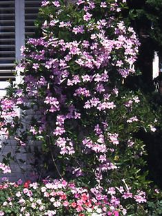 Use these tips from HGTV.com's gardening experts to grow eye-catching vines outside your home.