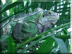 reptiles images | La versión para resoluciones de 800x600 - Ocupa 93.8 KB