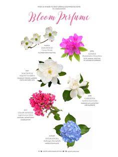 Bloom Perfume: When & Where to Spot Blooms in Charleston, S.C | Explore Charleston Blog