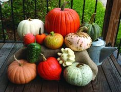 AUTUMN HARVEST DISPLAY - PUMPKIN - SQUASH - GOURD MIX (60-120 DAYS) - Pinetree Garden Seeds - Vegetables