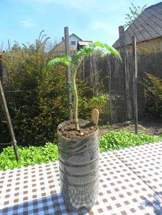 Így ültesd el a paradicsomokat – fotósorozat – Nagybetűs Élet Plants