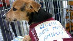 Suzano Shopping ajuda cães e gatos a encontrar um novo lar em SP