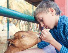 The Gentle Barn Farm Sanctuary Rehabilitates Animals That in Turn Help Heal At-Risk Children
