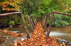 Autumn leaves on foot bridge, Great Smoky Mountains National Park, Tenn. (© Willard Clay/Getty Images)