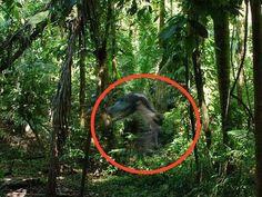 ''Eles ainda existem'' Explorador cientifico divulga foto de Dinossauro vivo no Pantanal brasileiro ~ Sempre Questione