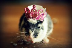 hat on a gerbil (by juliepersons @ flickr)