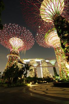 "Super Trees ~ Gardens by the Bay ~ Singapore ~ Every evening for fifteen minutes the trees are lit up for a light show, the lights dancing in sync with the music. ~ Trisha Hoque ~ Miks' Pics ""Gardens by the Bay ~ Singapore"" board @ http://www.pinterest.com/msmgish/gardens-by-the-bay-~-singapore/"