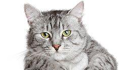 Vše pro kočky- beru všecko :-* Cats, Animals, Gatos, Animales, Animaux, Animal, Cat, Animais, Kitty