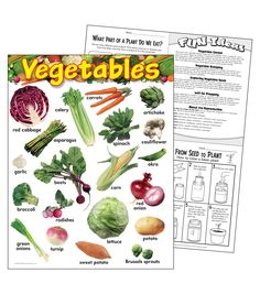 Vegetables Learning Chart 17\u0022x22\u0022 6pk, Seed Raising, Bean Plant, Kinds Of Vegetables, Teaching Supplies, Life Learning, Parts Of A Plant, Red Cabbage, Okra, Vegetable Garden