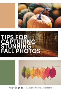 The leaves are changing and the temperature's dropping. Take advantage of the season and grab your camera to snap some breathtaking pictures! We've got some tips to get some photos you'll be proud to share! Autumn Photography, Photography Tips, Vibrant Colors, Colours, Digital Photography School, Clear Blue Sky, Fall Photos, Lush Green, Unique Photo