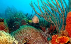 Image result for coral reef