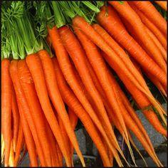 #ZANAHORIA La zanahoria contiene altos niveles de vitamina A y carotenos. La cantidad de la vitamina A que contiene es igual a la de las espinacas y casi doble de esta del perejil. Posee hierro , potasio, calcio y menos de fósforo. Es rica en antioxidantes.  El extracto de zanahoria protege  la epidermis de los rayos solares. Los carotenos protegen la piel y la mantienen hidratada. Después del perejil, la zanahoria es la que contiene mayor cantidad de beta carotenos. | Lasaponaria.es
