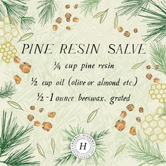 Did you know pine resin has been used historically for topical wound care? Learn how to make pine resin salve for your first aid kit! Healing Herbs, Medicinal Herbs, Natural Healing, Holistic Healing, Herbal Plants, Natural Oil, Natural Herbs, Herbal Medicine, Natural Medicine