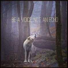 Please speak up for us and help put an end the wolf hunt. http://rallyforwolves.org/