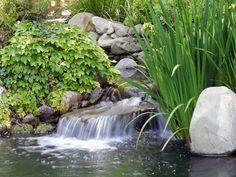 ¡Disfruta de un jardín acuático impresionante!