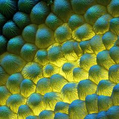 Scientific Photography: Plants seen in the Scanning Electron Microscope Pictures Of Spring Flowers, Medusa, Micro Photography, Flower Photography, Digital Photography, Amazing Photography, Scanning Electron Microscope, Microscopic Photography, Microscopic Images