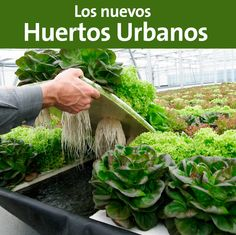 5 Secrets To Building A Successful Aquaponics System - Tools And Tricks Club Types Of Grass, Types Of Plants, Indoor Plants, Garden Plants, Organic Horticulture, Bonsai Seeds, Aquaponics System, Aquaponics Diy, Potting Soil