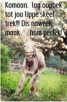 oh my lawd, such a silly cute donkey! Give me a donkey over horses or a pony any time Happy Animals, Farm Animals, Animals And Pets, Funny Animals, Cute Animals, Smiling Animals, Wild Animals, Funniest Animals, Crazy Animals