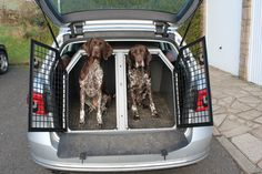 #GSP  #germanpointers #transK9 #dogbox #dogcrate #dogcage