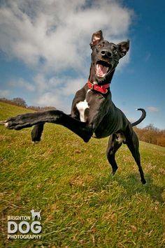 Brighton Dog Photography - Albert-25 by brightondogphotography, via Flickr