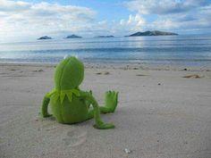 Kermit on tour in Rio de Janeiro Brazil Kermit Der Frosch Meme, Kermit The Frog Meme, Funny Kermit Memes, Cute Memes, Jim Henson, Sapo Kermit, Reaction Pictures, Funny Pictures, Funny Frogs