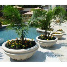 Round Fiberglass Roman Planter - Garden Planters at Simply Planters Planters Around Pool, Tree Planters, Outdoor Planters, Garden Planters, Outdoor Pool, Outdoor Gardens, Planter Boxes, Planter Ideas, Outdoor Decor