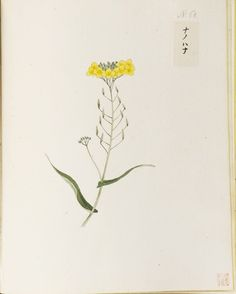 "O-Jewel Blog — Kawahara Keiga picture book Vol.2 ""botanical art"""