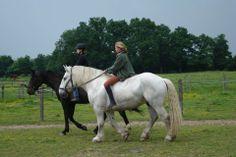 """Débutants ou initiés, prenez de la hauteur pour découvrir les sentiers du Loire Layon, à cheval. Partez en balade avec """"Loire Layon équestre"""" ou  """"L'arc en selle"""" à Chaudefonds sur Layon, """"Les Roncinières"""" à Saint Georges sur Loire, ou avec l""""Attelage de l'Aubance et du Louet"""". #equitation #loirelayon #jaimelanjou #loirepower"""