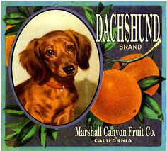 The Marshall Canyon Collection - Dachshund Dog Orange Citrus Fruit Crate Box Label Art Print