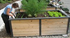 Un potager en hauteur vous procure plus rapidement et plus longtemps des légumes frais.