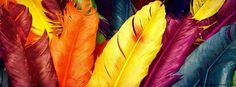 Color Rainbow Feathers Facebook Cover