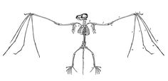 Vintage Halloween Clip Art | Vintage Halloween Clip Art - Super Creepy Bat Skeletons - The Graphics ...