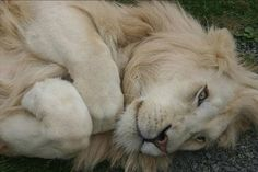 Love big cats (lions, tigers, etc) They are so beautiful yet so powerful