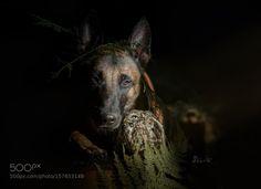 Darkness by TanjaBrandt via http://ift.tt/1Y8zgf9