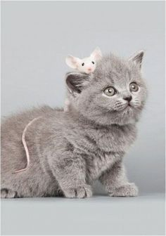 J'adore my cats..BDonna