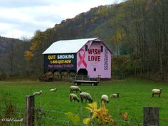 "Tucker County, WV. Fifth ""Quit Smoking"" barn! Love it!"