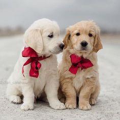 dog イヌ 犬可愛い画像まとめ http://ift.tt/1ot6Uh2