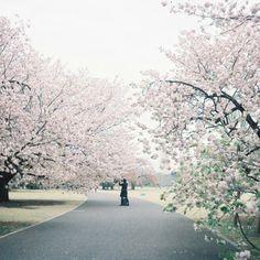その他二眼レフカメラ - 桜咲く -  春  新宿御苑  - Camera Talk -