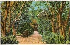 Vintage postcard from Fort Myers, Florida showing the winter home of Henry Ford.