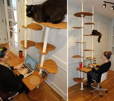Desk Elements Cat Tower... because every time I am on the computer they insist upon being all up in my business anyway.  :)