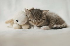 Kitty had a little lamb.